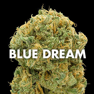 Ct Weed Reviews Blue Dream