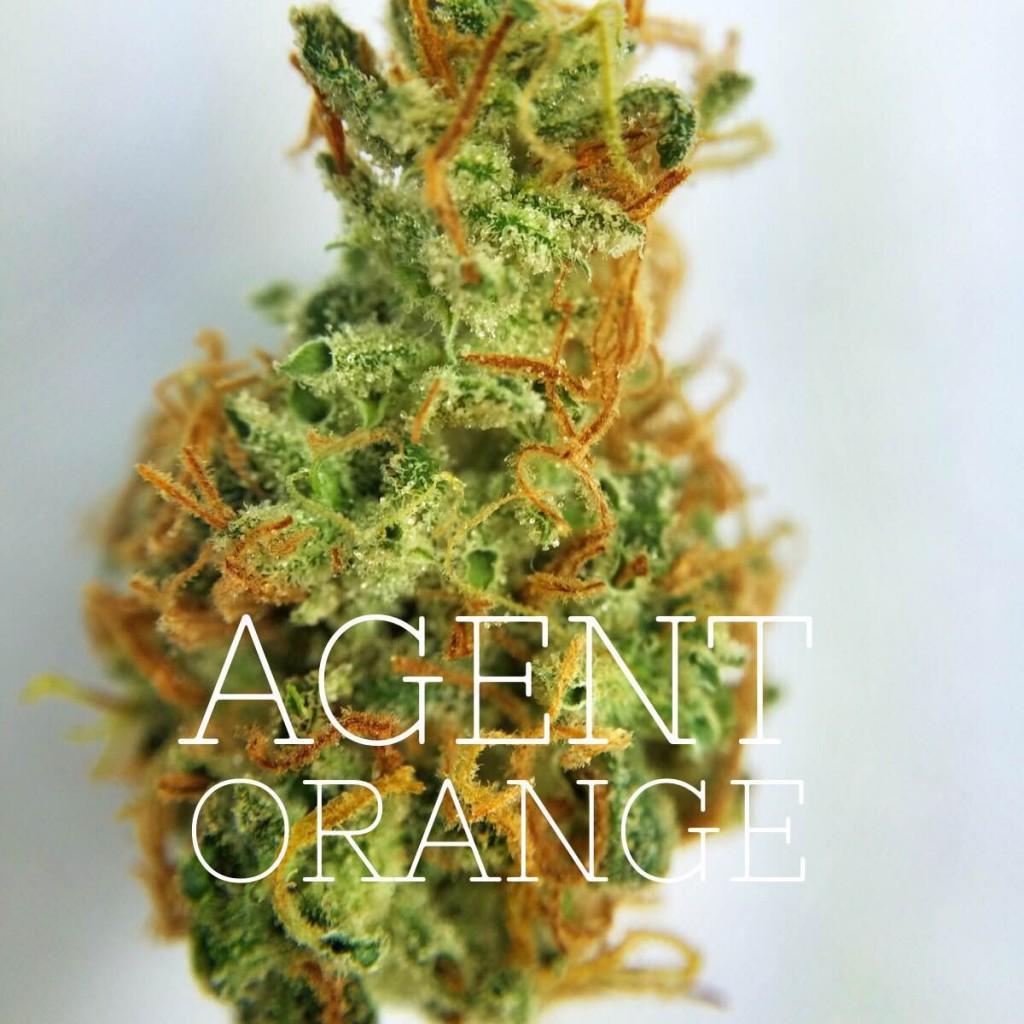 Big bead cannabis reviews agent orange strain - Boutique orange agen ...