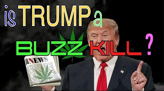 The Weed News At 420 Trump Effect Weed
