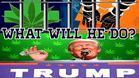 CannaVice TV Marijuana Legalization Trump ft Johno Show
