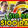 High Hipsters $10 Dabs vs $100 Dabs