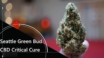Postive Smash 420 Legal Weed Review of CBD Critical Cure by Seattle Green Bud