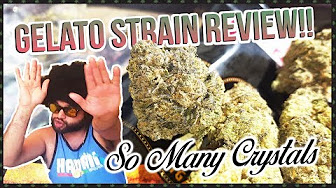 Master Bong Gelato Strain Review