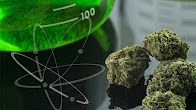 Doctor Frank Scientist Tells Us Why Cannabis is the Best Medicine