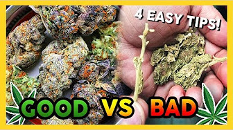 That High Couple How to Tell GOOD vs BAD Weed