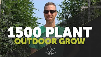 420 Science Club Gary Tours 1,500 Plant Outdoor Grow - Leap Farms // 420
