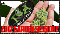 Master Bong TGA Seeds Garden Session 2017