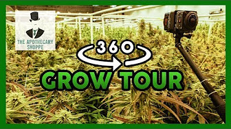 That High Couple 360 VR Tour of The Apothecary Shoppe's Weed Grow