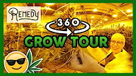 That High Couple 360 VR Tour of Remedy's Weed Grow
