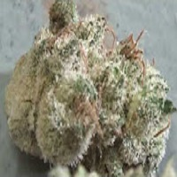 CT Weed Reviews Citrus SapCT Weed Reviews Citrus Sap