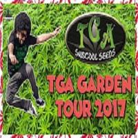 Master Bong TGA seeds Weed Garden | 2017