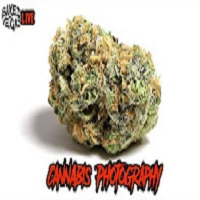 Baked In Vegas BiV LIVE – CANNABIS PHOTOGRAPHY