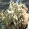 CT Weed Reviews Durban Poison