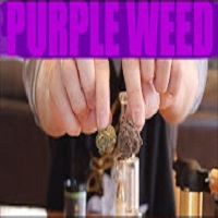 Arend Richard THE MOST PURPLE WEED I'VE EVER SEEN!