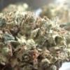 CT Weed Reviews Super Silver Sour Diesel Haze