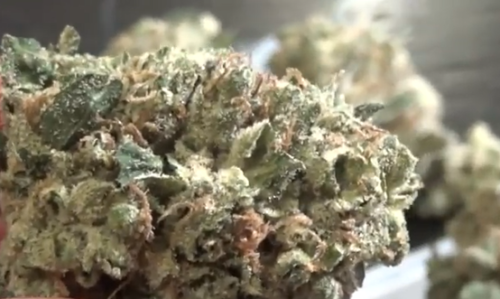 CT Weed Reviews Super Silver Sour Diesel Haze