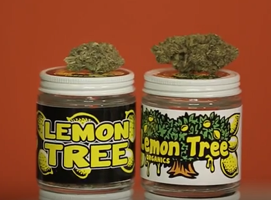 Lemon Tree Strain Review | Loaded Up