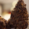 Positive Smash 420 MOST PURPLE WEED EVER?!?! North Coast Growers Purple Persuasion
