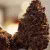 Positive Smash 420 MOST PURPLE WEED EVER?!?! North Coast Growers Purple Persuasion