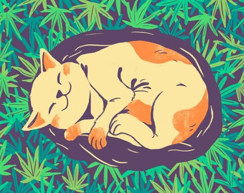 Pot Can Help Your Pets Too